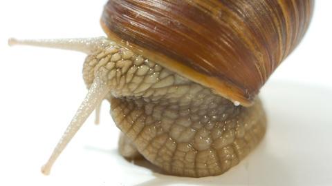 snail 4k Footage