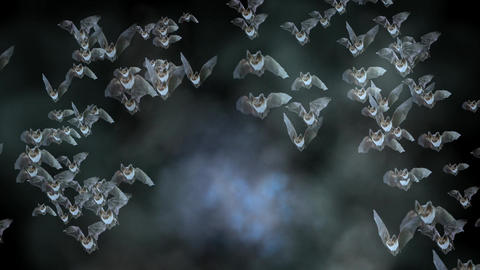 Bats Stock Video Footage