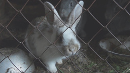 Little young rabbits in a cage Footage