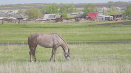 Horse eating grass at the edge of a village Stock Video Footage