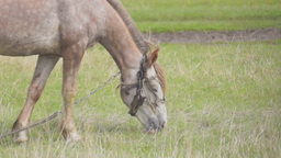 Horse eating grass at a meadow Stock Video Footage
