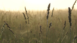 Wet grass with dew drops early in the morning Footage