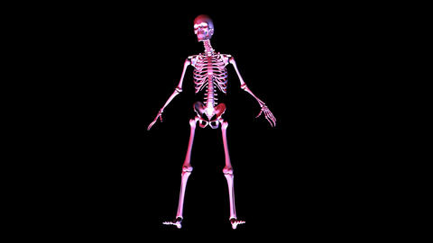 Skeleton Posing stock footage