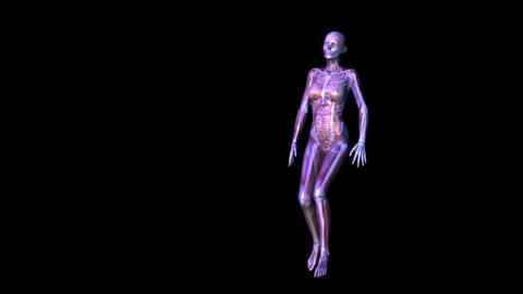 Anatomy stock footage