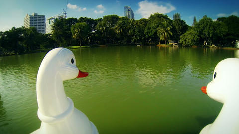 Duck Paddle Boat Ride stock footage
