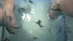 fish spa Footage