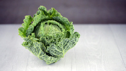 Savoy cabbage Footage