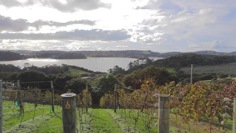 pan from a private winery on waiheke island Stock Video Footage