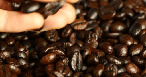 4k pick coffee bean by hand,drinks caffeine food material,delicious dishes bean Footage