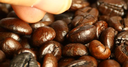 4k pick coffee bean by hand,drinks caffeine food... Stock Video Footage