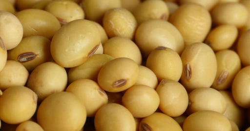4k soybean beans closeup,seeds food raw material,delicious dishes seed bean Footage