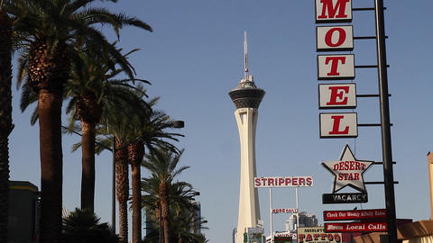 view of the stratosphere hotel beside palm trees Live Action