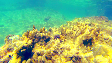 Underwater close up shot. Floating above coral Footage