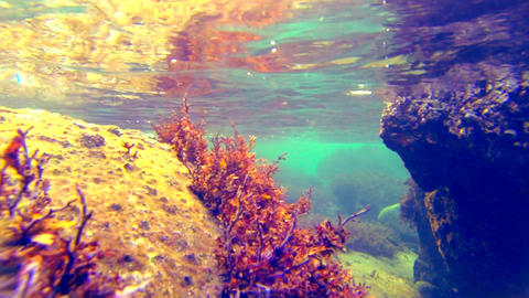 Underwater close up shot. Seaweed dancing in waves Stock Video Footage