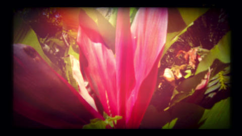 Retro look tropical plant close up Stock Video Footage
