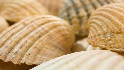 Seashells, sea shells Footage