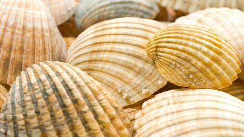 Seashells, sea shell background Footage