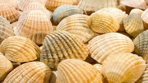 Seashells nature backgrounds Stock Video Footage