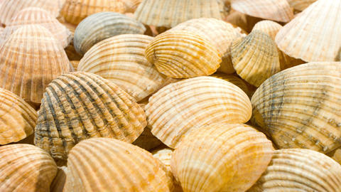 Seashells nature backgrounds Footage