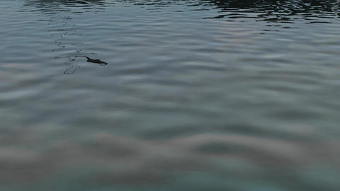 Animation Of A Water Surface stock footage