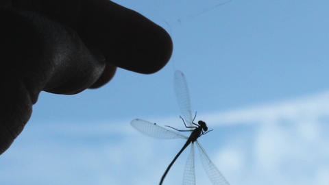 Dragonfly hanging on a spider thread and set free Stock Video Footage