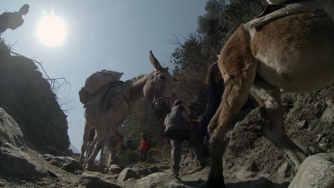 HIMALAYAS, NEPAL - MARCH, 2014: 2.7K. Mules carryi Footage