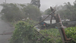 Typhoon causing strong wind and rain on a farm Stock Video Footage