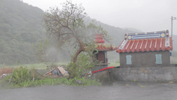 Typhoon Matmo Blowing A Tree Next To A Small Chine stock footage