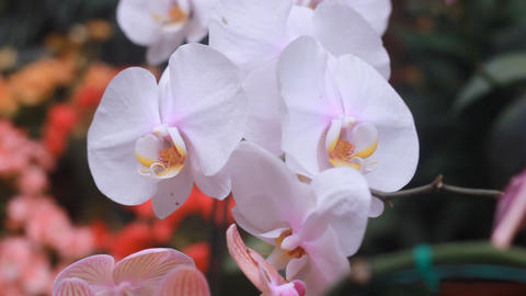 orchid farm Footage
