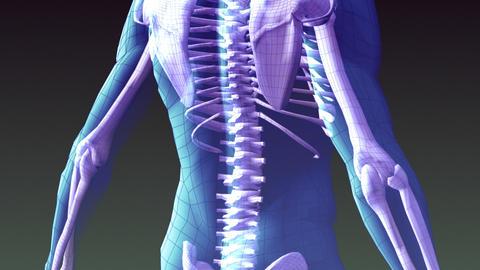 Xray Animation Of Human Skeleton stock footage