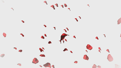 3D Animation of Rose Petals Stock Video Footage