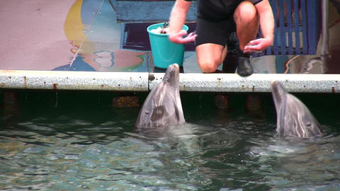 singing dolphins Stock Video Footage