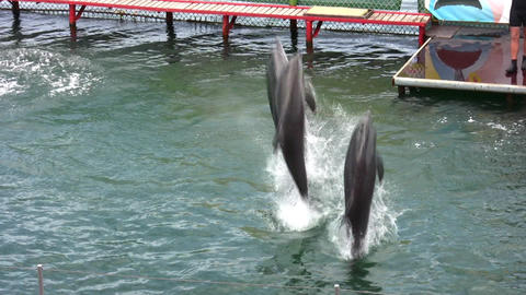 jumping dolphins Stock Video Footage