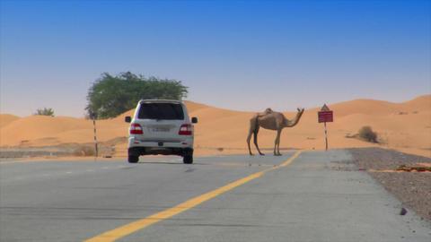 camel on desert street heat haze Stock Video Footage