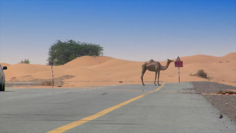 car camel speed pass heat haze Stock Video Footage