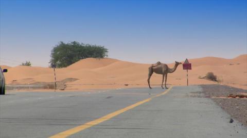 car camel speed pass heat haze Stock Video Footage
