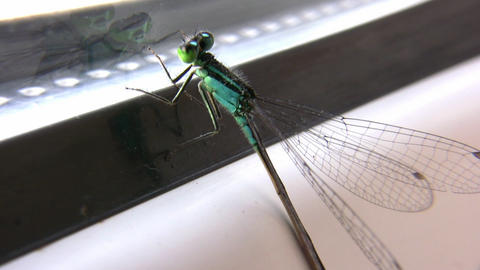 dragonfly on window Footage