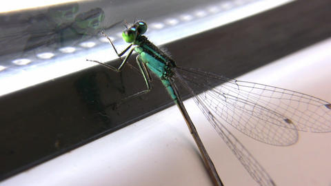 dragonfly on window Stock Video Footage