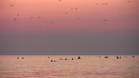 people and birds silhouette on sunset sea Stock Video Footage