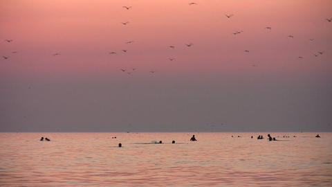 people and birds silhouette on sunset sea Footage