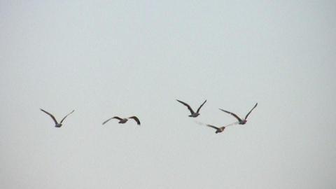 birds in sky Stock Video Footage