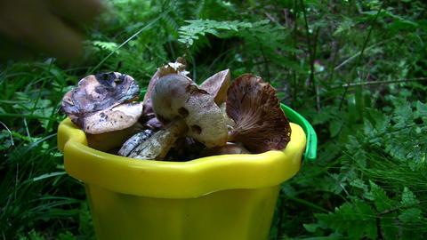 mushrooms in bucket Stock Video Footage