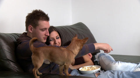 Adorable couple watching television with their sit Footage