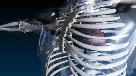 Skeleton with beating heart Stock Video Footage