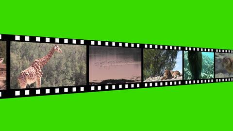 Montage of Wildlife Footage