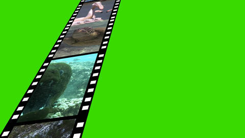 Collage of Wildlife motion Footage Animation