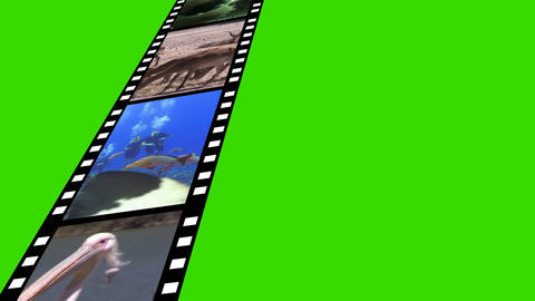 Collage of Wildlife motion Footage Stock Video Footage