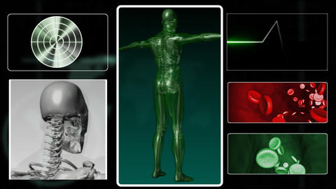 Digital human body in 3D Animation