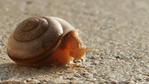 1933 Snail Crawling on Ledge with Palm Trees, HD Footage