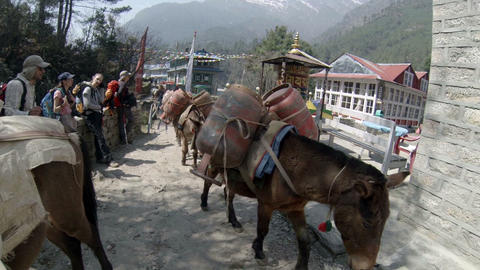 HIMALAYAS, NEPAL - MARCH, 2014: Mules carrying gas Footage